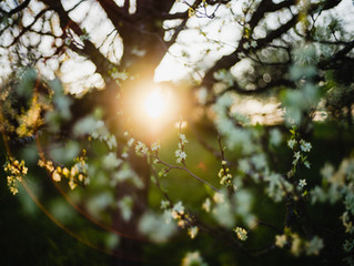 Earth-Heart Living: A Deep Dive Journey