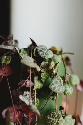 Image by Kristen Colada Adams