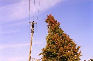 Power Lines & Harshly Pruned Trees