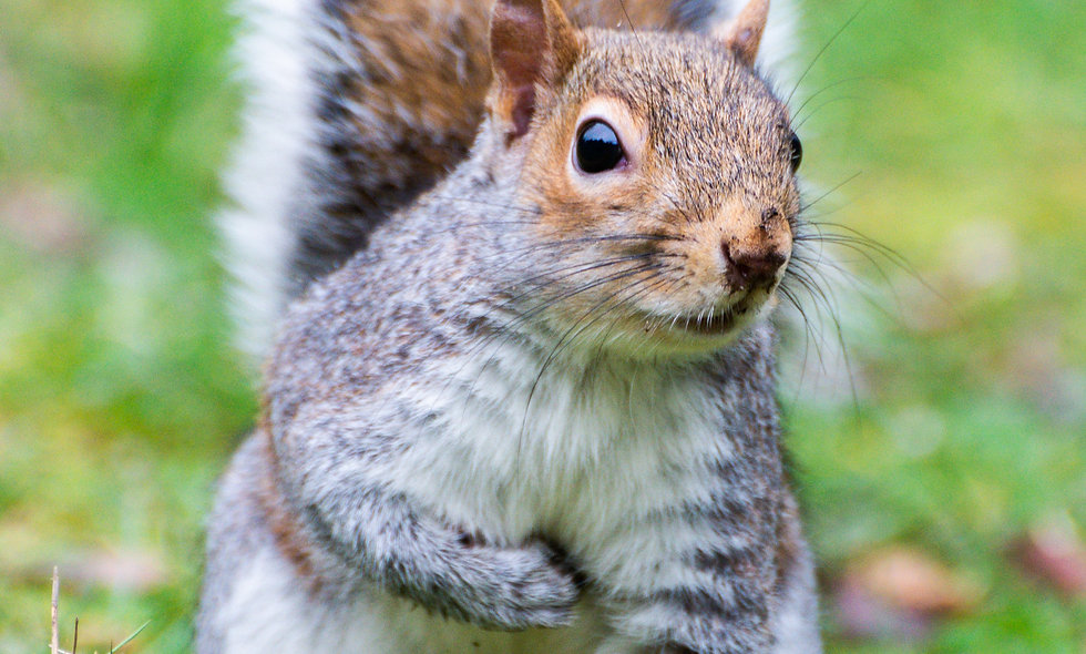 Squirrels and Sight Words: Sight Words, Personal Dictionary, and Plural Endings