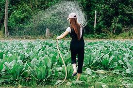 Nainen kastelee kasvimaan kasveja helteisenä kesäpäivänä Vantaalla.