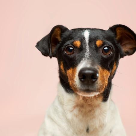 ¿A mi perro le puede dar diabetes?