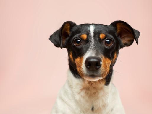 Protection animale : la Fondation 30 millions d'amis aide deux refuges en Corse