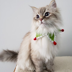 Cat Collars Harnesses, Leads and Accessories