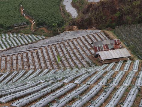 Siaran Pers   Urgensi Evaluasi Strategi Penyediaan Input Pertanian