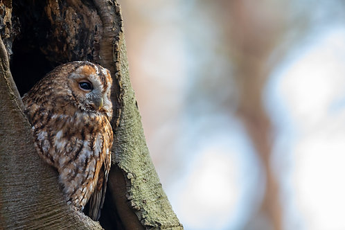 Wisdom of the Owl Empowerment - Connect with Goddess Athena