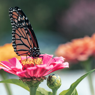 Pollinator Week 2012