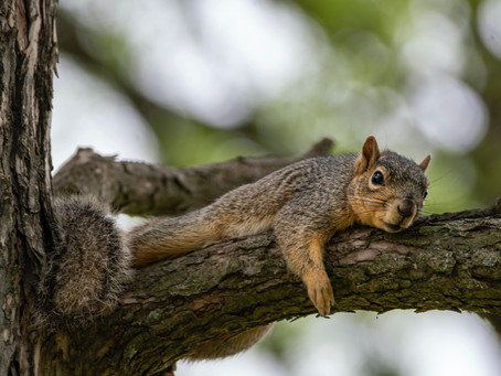 Bernard Pivot Questionnaire with THE SQUIRRELS
