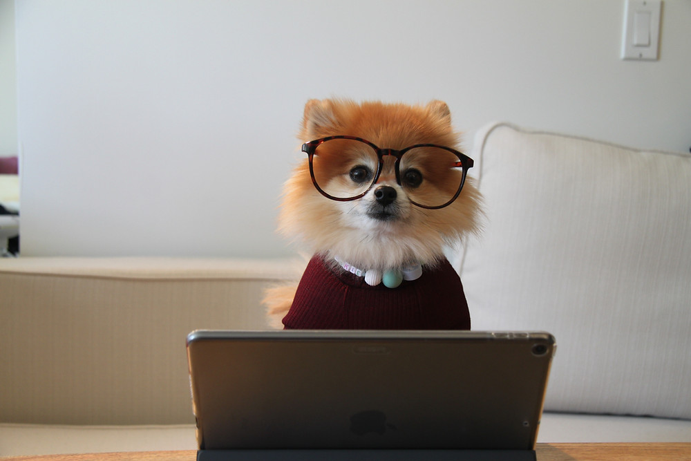 A dog dressed up sitting at a computer as an online therapist