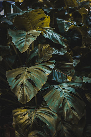 Image by Tadeu Jnr
