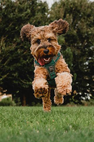 Metsoniemen koirakodissa koirasi viihtyy niin ulkona kuin sisälläkin.