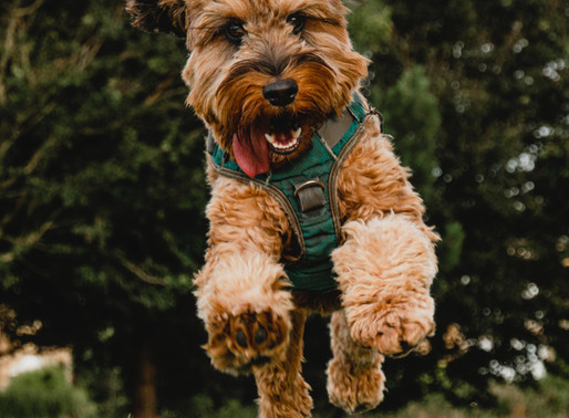 Γιατί οι σκύλοι είναι αξιαγάπητα κατοικίδια