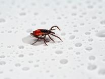 Tips & Tricks: Fleas & Ticks