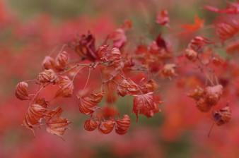 Image de Hiroshi Tsubono