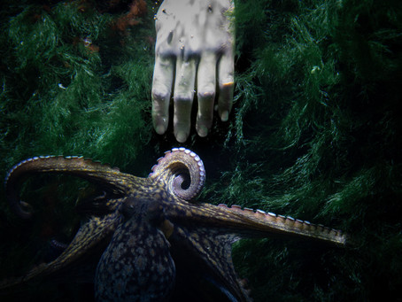 La solitude de la pieuvre, cet être sensible et extrêmement doué...