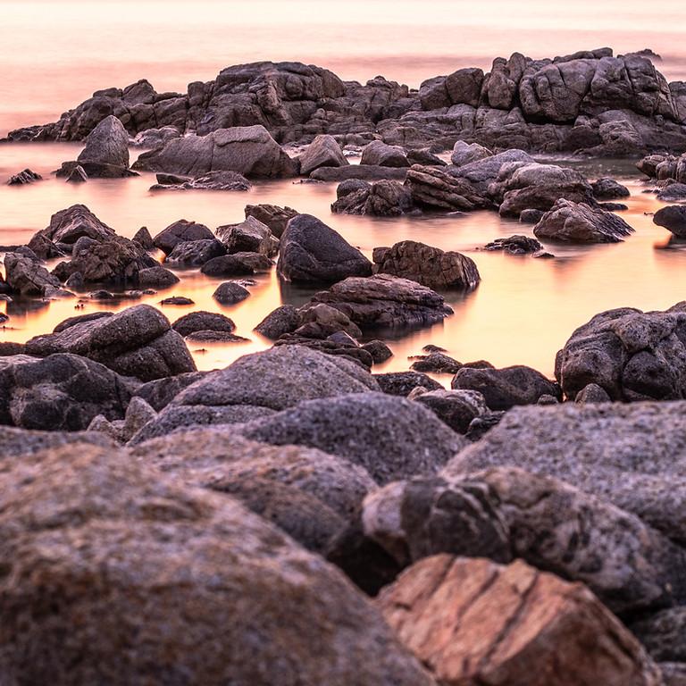 Rocky Shore Ecology