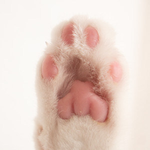 High Paw People!