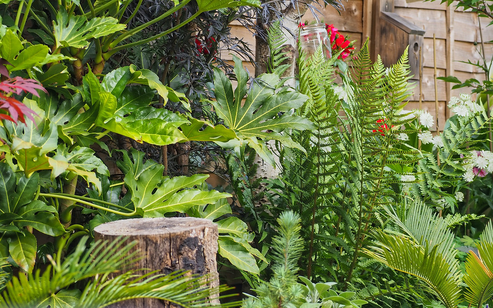 tropical-garden-with-fatsia-japonica