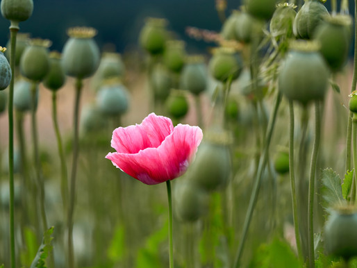 China's first Opium War & the Western World