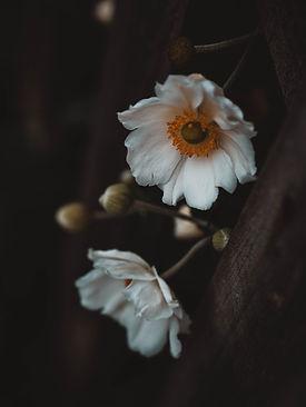 Image by Chrissa Giannakoudi