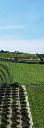 Agrícola y Agroindustria