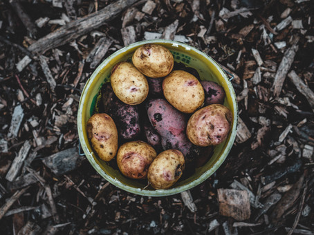 What Plants to Eat For Mental Health