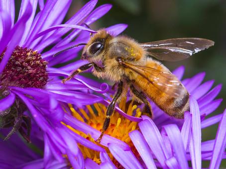 Pollinators 101