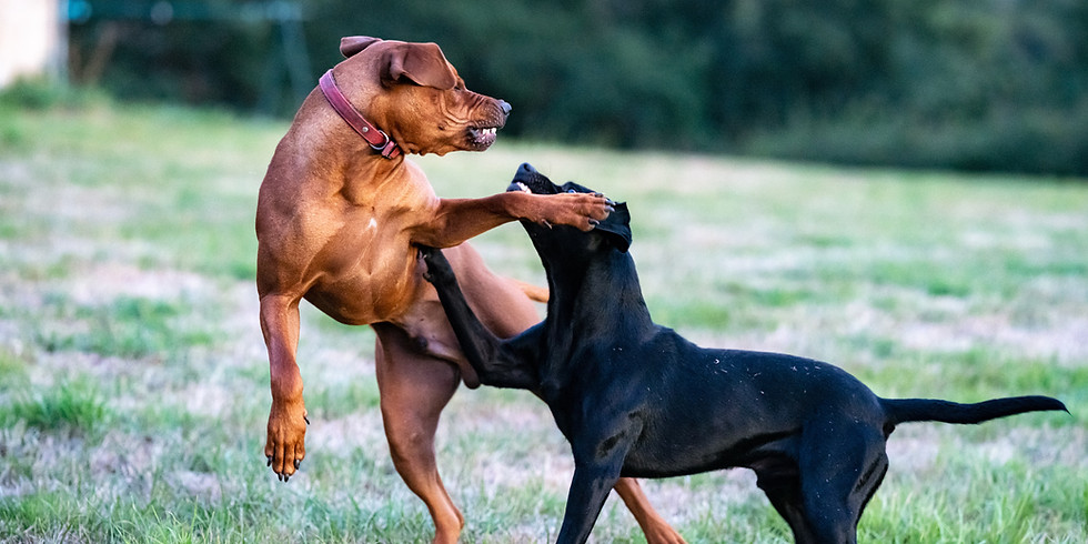 FREE Reactive Dog Strategies Tester Class