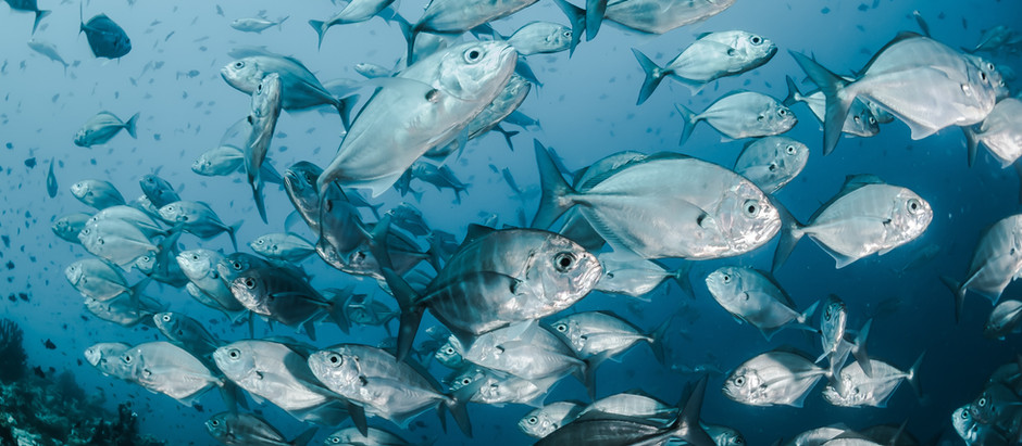Climate Change is Threatening Our Sea based Foods, According to A Study