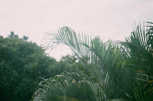 Image by Jisun Han