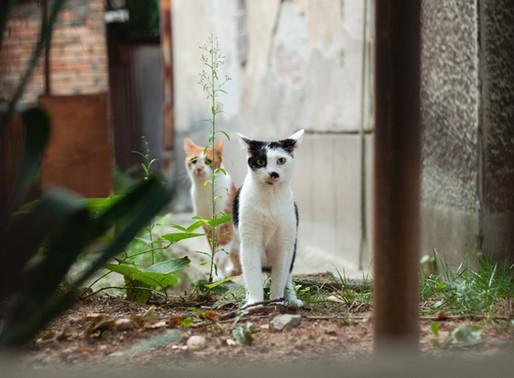 Plateau-Mont-Royal : Des chats blessés par un tireur