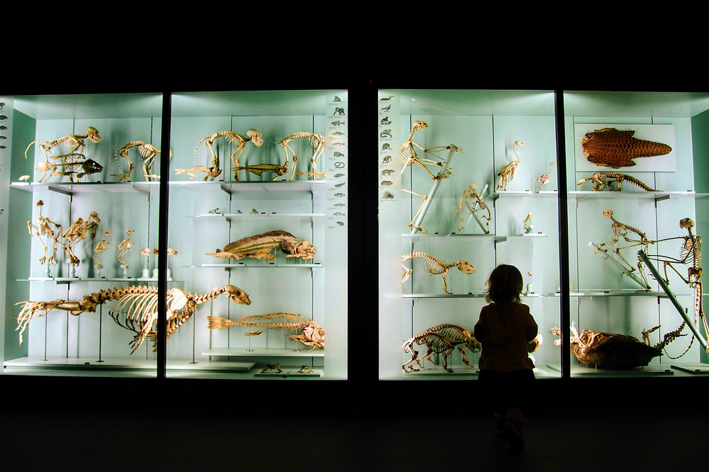 20 Fun Museums Offering Free Virtual Tours
