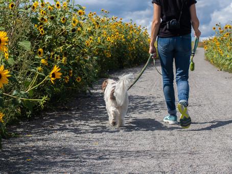 6 Tips For a Better Walk