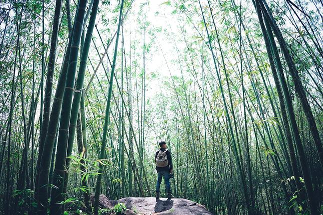 Image by Họ Phạm