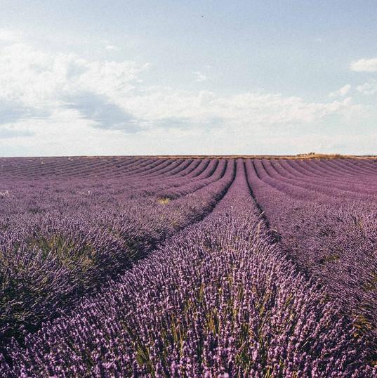 Lavande ou truffes en Provence