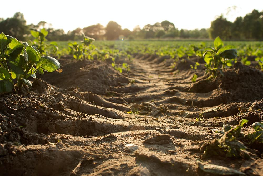 healthy soil pathway surrounding lush greenery
