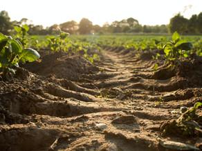 Nährstoffarme Lebensmittel - Gründe und Folgen