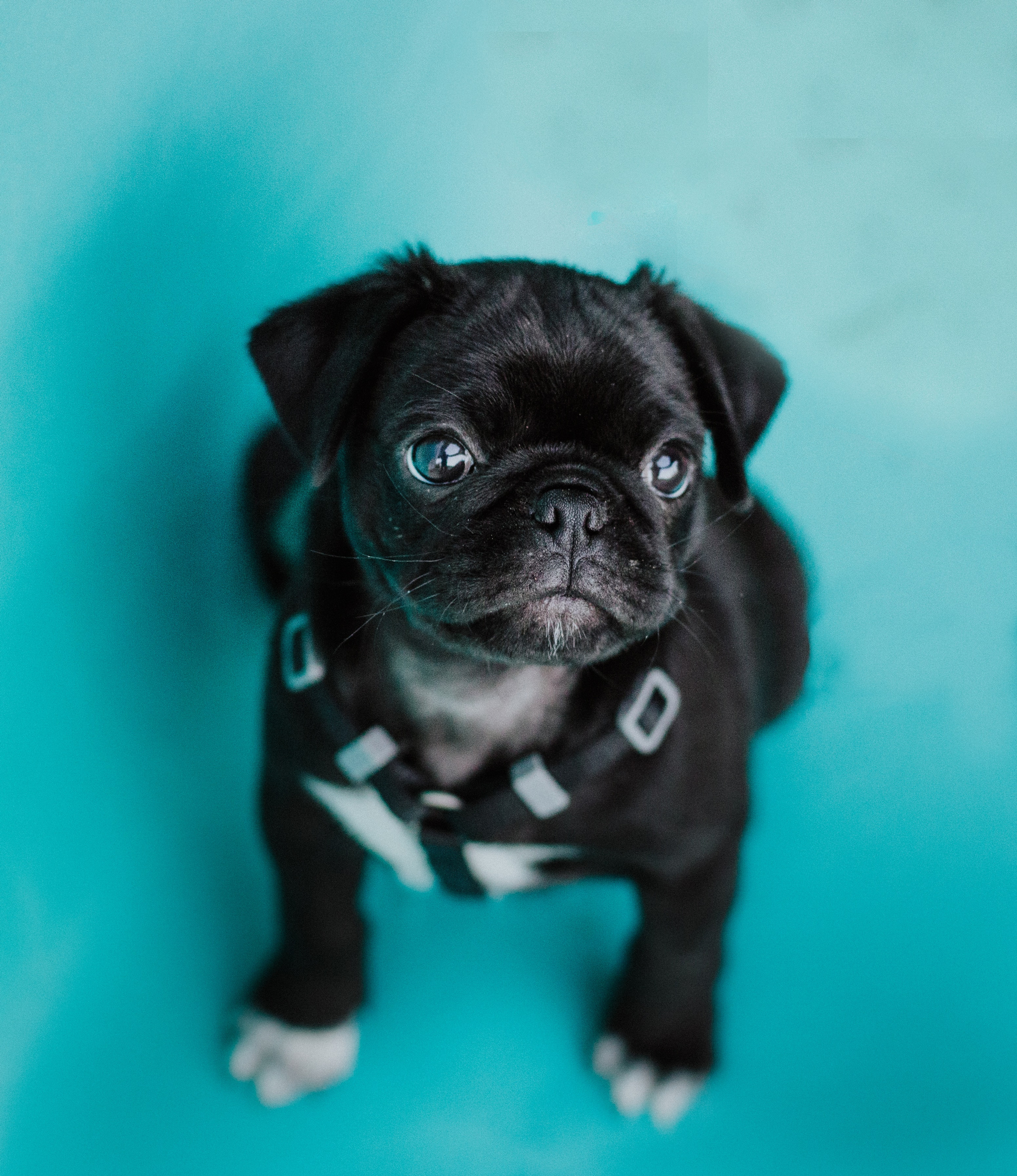 Good Pup Training