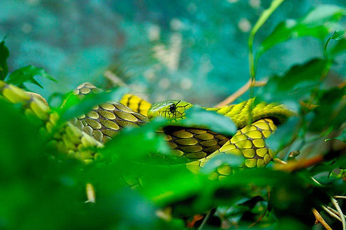 Image by ryan baker