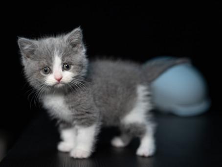 Makanan yang Bagus untuk diberikan pada Kucing usia 1 Bulan