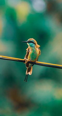Image de Deepak H Nath