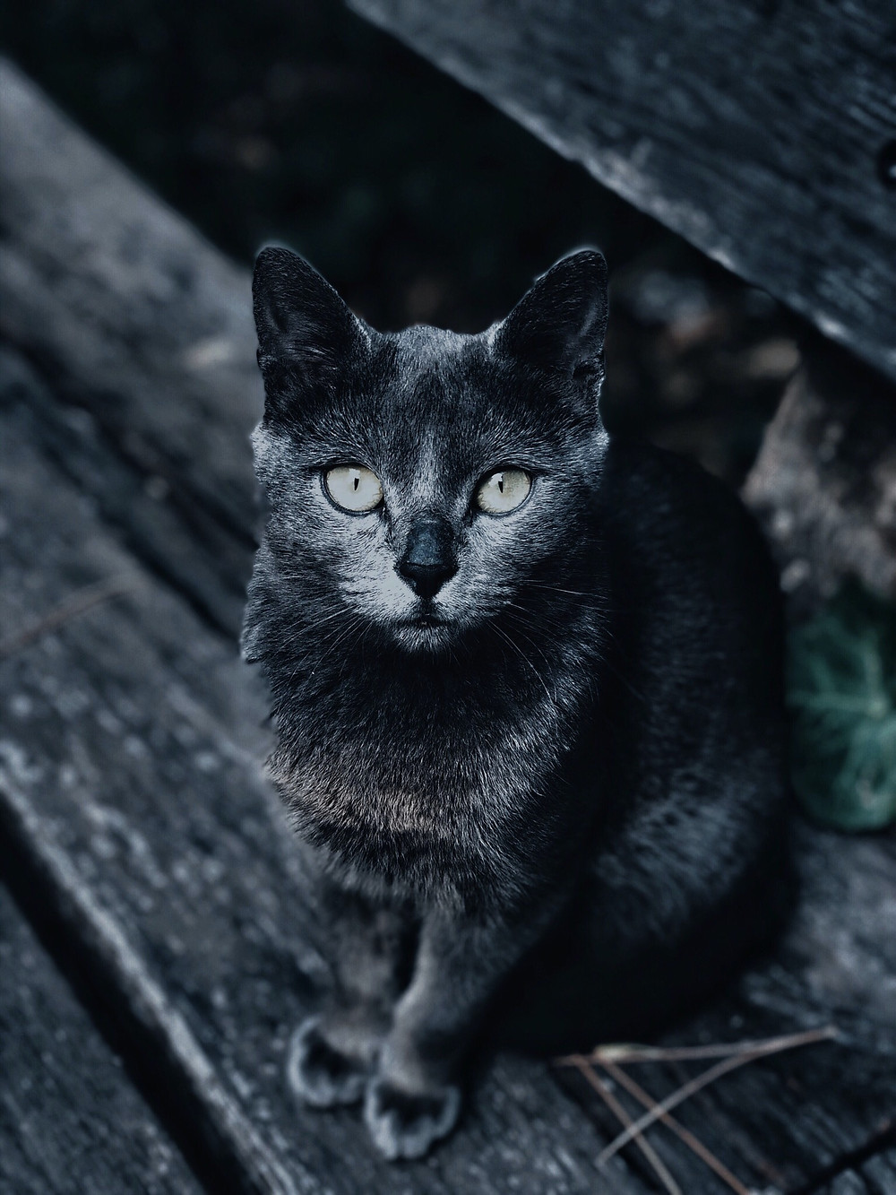 Thank your feline friend for guiding you on the right path and do witch work to break the misconception of a black cat being a bad omen.