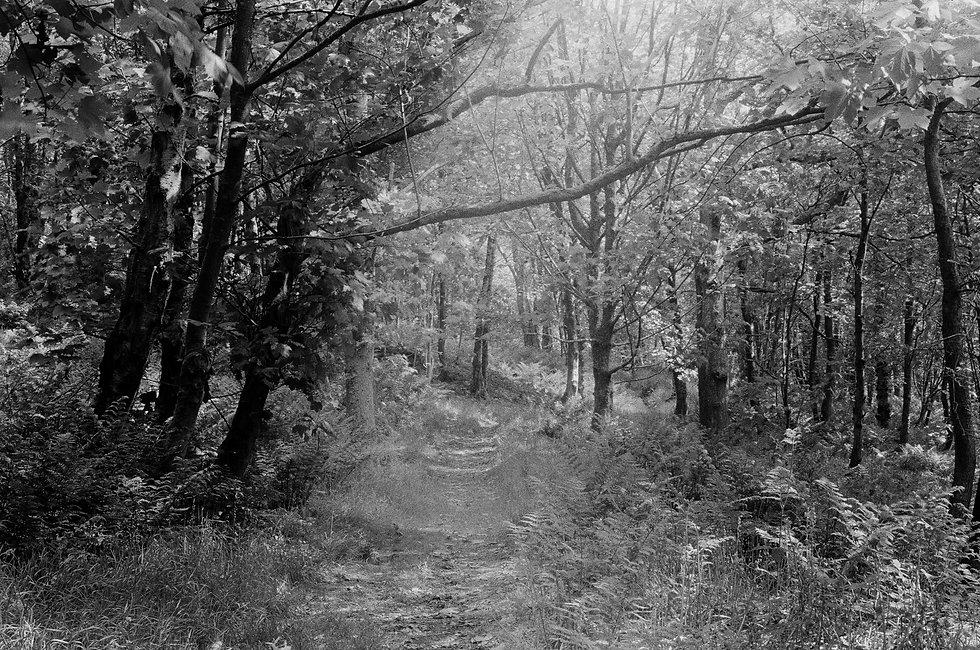 Image by Jakob Cotton