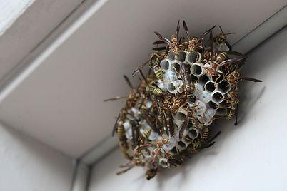 Pest Control Elkridge