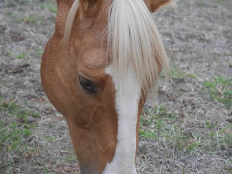 Havasupai falls mule and horse abuse!😲😢😡