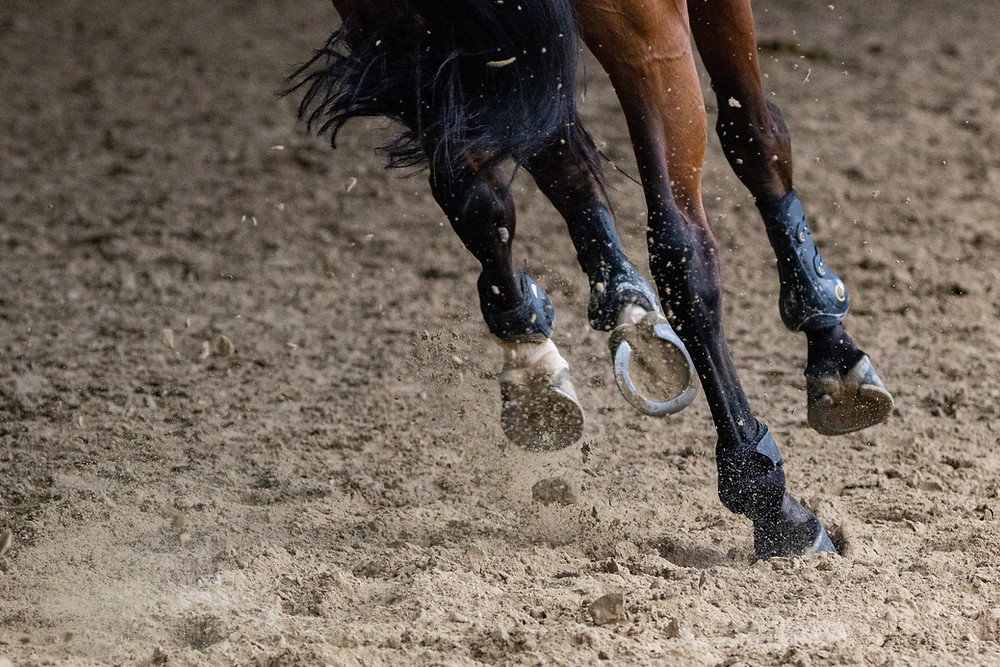 horse with horse shoes running away