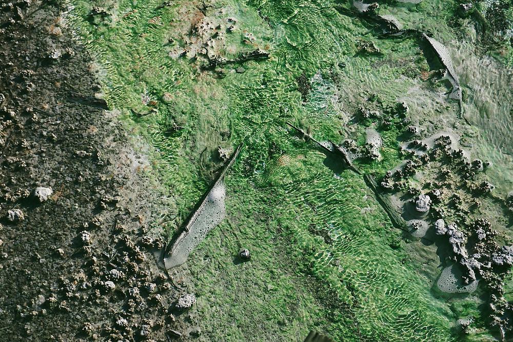 Algae along shoreline