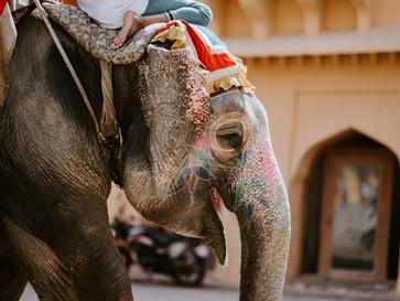 Unleash the Indian Elephant – Two Big Ideas