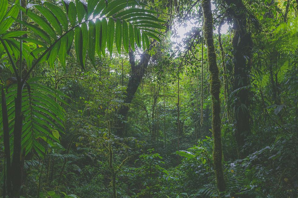 Image by Isaac Quesada