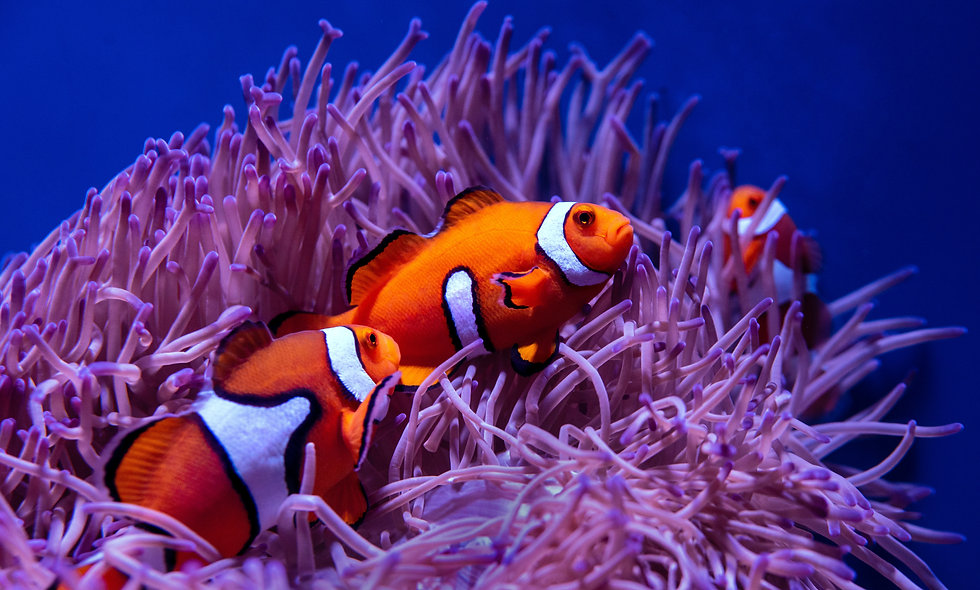 Coral Reefs and Critters